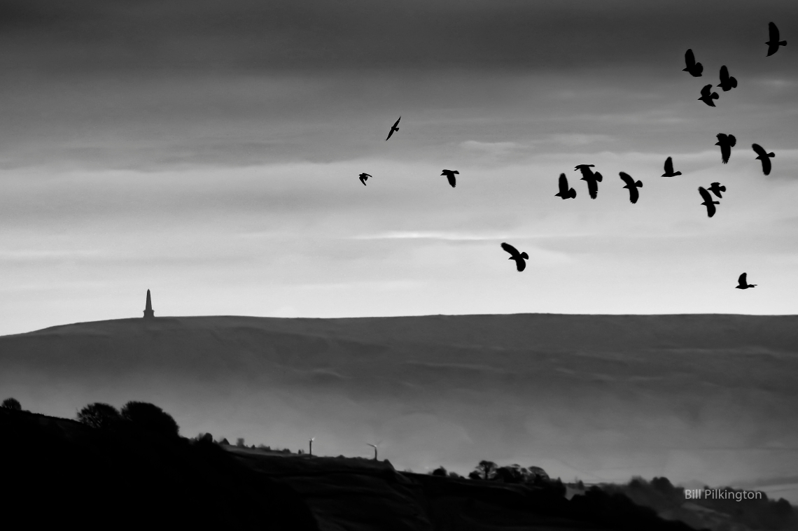 birds over Stoodley Pike silhouetted by a bright sky
