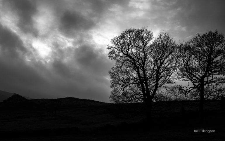 trees silhouetted by a moody, threatening sky behind them