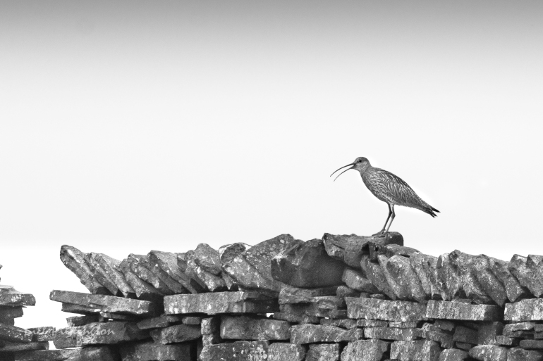 bird on a wall-4