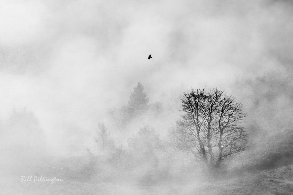 bird in the mist-1-2
